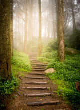 Stairs Going Up Hillside In Forest Toward Sunset