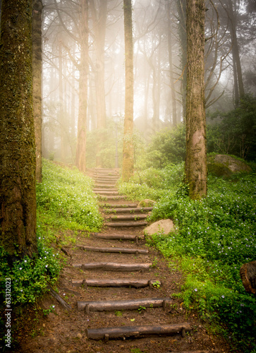 Fotobehang Bestsellers stairs going up hillside in forest toward sunset