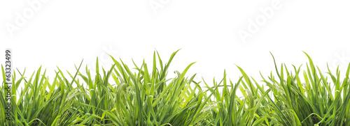 swieza-zielona-trawa-odizolowywajaca