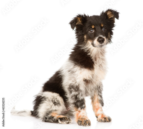 Photographie  young mixed breed dog looking at camera. isolated on white