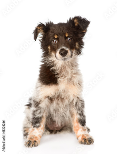 young mixed breed dog sitting in front. isolated on white Canvas Print