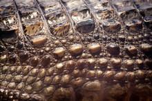 Crocodile Skin Texture.