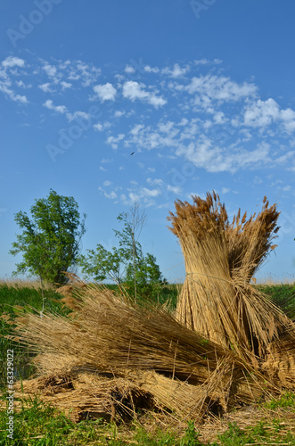 Fotografia, Obraz  Cane rick at blue sky background