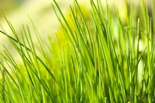 Nach rechts Gras, nach links...