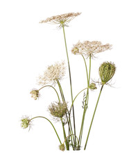 Bouquet Of Wildflowers (wild C...