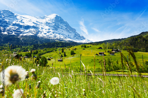 Blooming flowers with beautiful Swiss landscape
