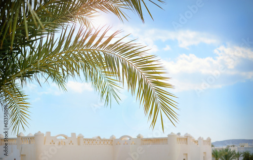 Poster Palmier Beautiful palm branch on blue sky background