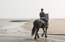 Horseback Riding On The Beach Early In The Morning