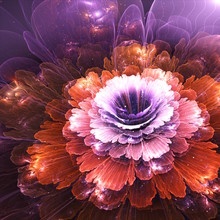 Abstract Flower, Computer Gene...