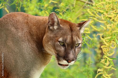 Poster Puma PUMA profil