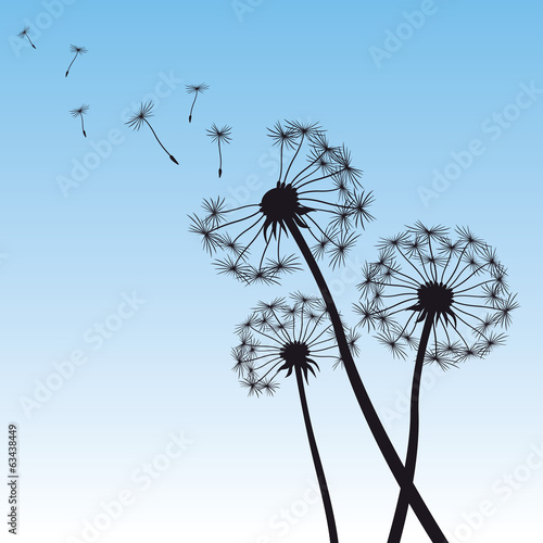 vector illustration dandelion blue sky - 63438449