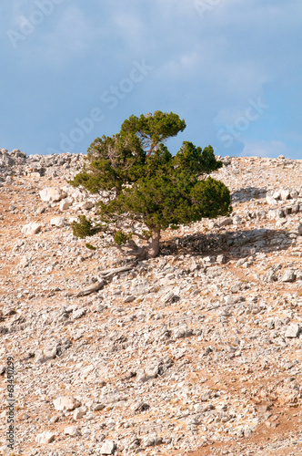Plakat  Lonely tree on the mountain, landscapes of Turkey