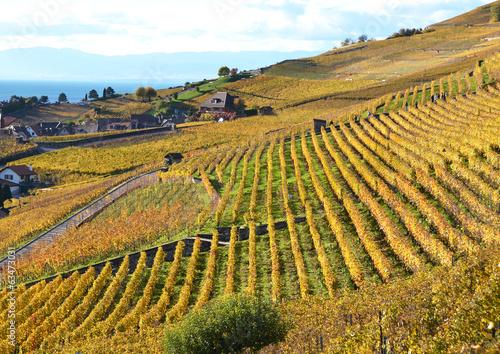 In de dag Toscane Vineyards in Lavaux region, Switzerland