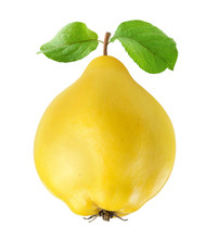 Isolated Quince. One Quince Fr...