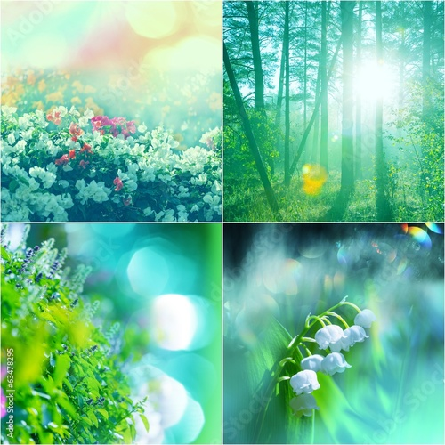 Photo Stands Turquoise Flowers collage