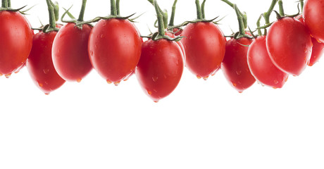 oval tomatoes with water drops, banner,isolated