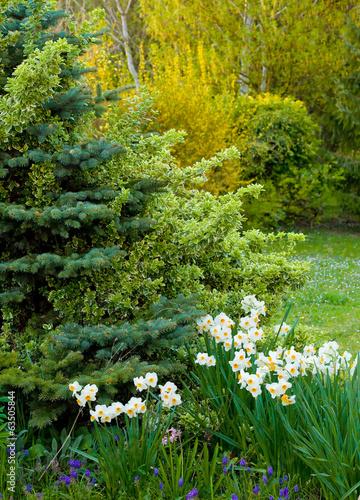Papiers peints Marguerites Jardin au printemps