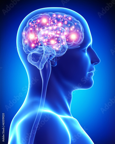 Anatomy of male active brain Wallpaper Mural