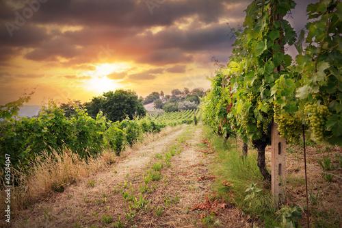 Fototapeta winnica   winnice