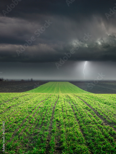 Obraz na płótnie Young wheat crop in field against large storm