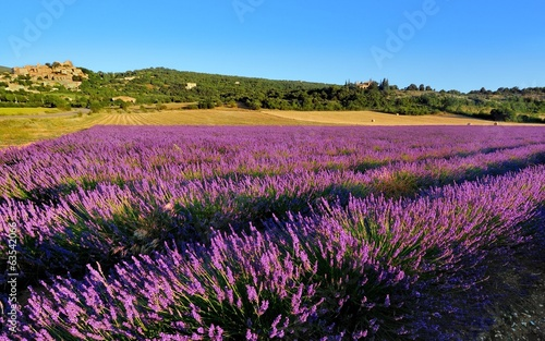 Garden Poster Lavender la lavande en provence
