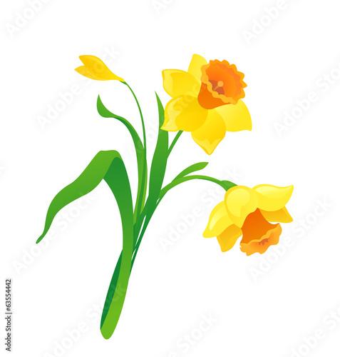 Fényképezés Cartoon daffodil