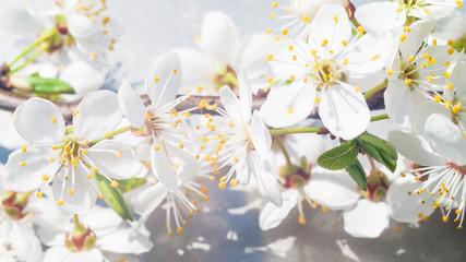 Panel Szklany Podświetlane Florystyczny flowers