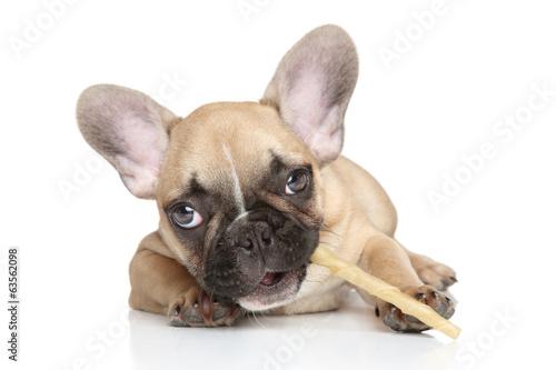Deurstickers Franse bulldog Dog chewing a stick