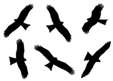 Black Kite In Flight Silhouettes