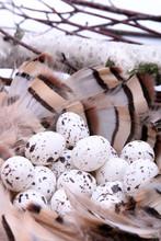 Bird's Nest With Eggs Surround...
