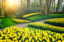 Spring Landscape With Yellow D...