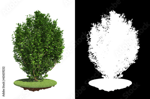 Foto  Green Bush with green grass on White Background.