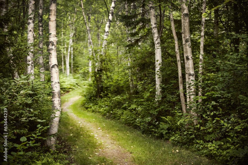 Fototapeta Path in green summer forest