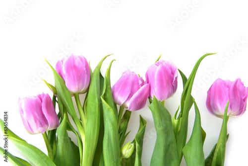 Foto op Plexiglas Tulp pink tulips