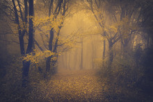 Mysterious Foggy Forest With A...