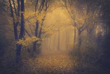 Mysterious Foggy Forest With A Fairytale Look