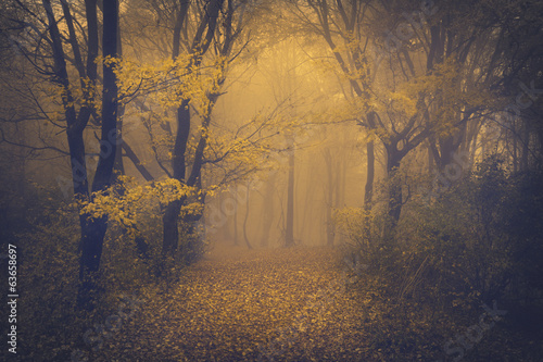 Spoed Foto op Canvas Grijze traf. Mysterious foggy forest with a fairytale look