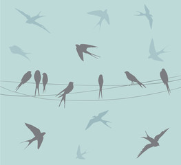 Fototapeta Birds on a wire