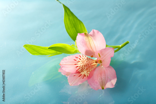 Photo Stands Water lilies Floating flower close up