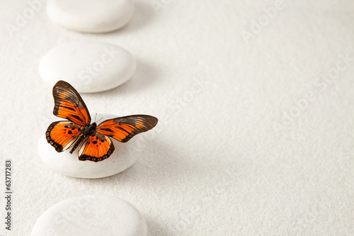 Juliste  Background with rocks and butterfly