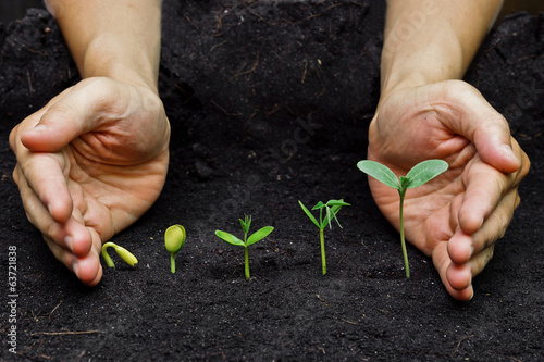 Foto plants growing in sequence of seed germination on soil