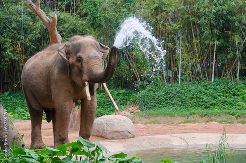 Fotobehang Olifant Elephant make water spray - Nature shower