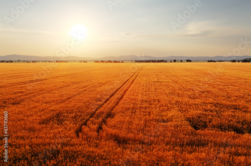 Foto op Canvas Rood traf. Rural landscape at dawn with the sun over the fields.