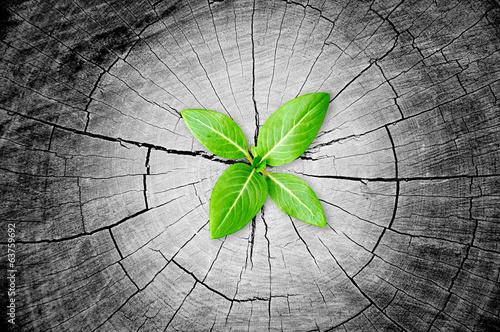 Foto Sapling growing from stump - regeneration & development concept