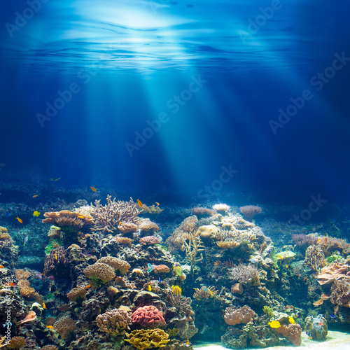 Deurstickers Koraalriffen Sea or ocean underwater coral reef snorkeling or diving backgrou