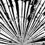 Streszczenie tekstura bambusa - 63763880
