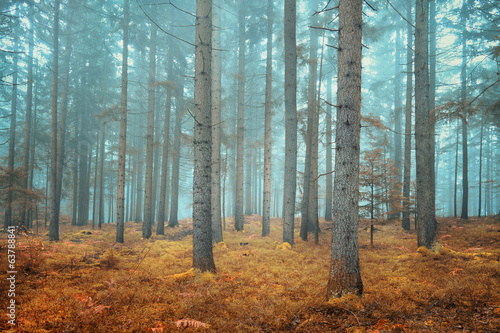 Tuinposter Weg in bos Dreamy conifer forest