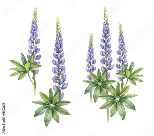 Photo Wild lupine flowers on white background