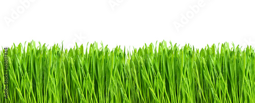 Deurstickers Gras fresh green grass isolated on white