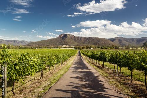 Wall Murals Vineyard Hunter Valley vineyards